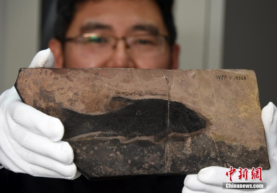 中国发现世界最早铰齿鱼类新属种